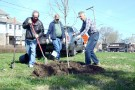 "Steve Smith, Charlie Johnson and Tom McDonald, all of Tree Toledo, plant an Autumn Blaze Maple by the Peter Navarre Monument, Navarre Park, for Earth Day. The tree was planted in conjunction with the Meagher 43605 Foundation in honor of Andrew Meagher. According to 43605 Foundation founder Christine Marie Meagher, the tree has been nicknamed ""Big Red MAHEEZE, the Swamp Maple of Rt. 2."" The tree leaves turn a dark pink in the fall. (Press photo by Ken Grosjean)"